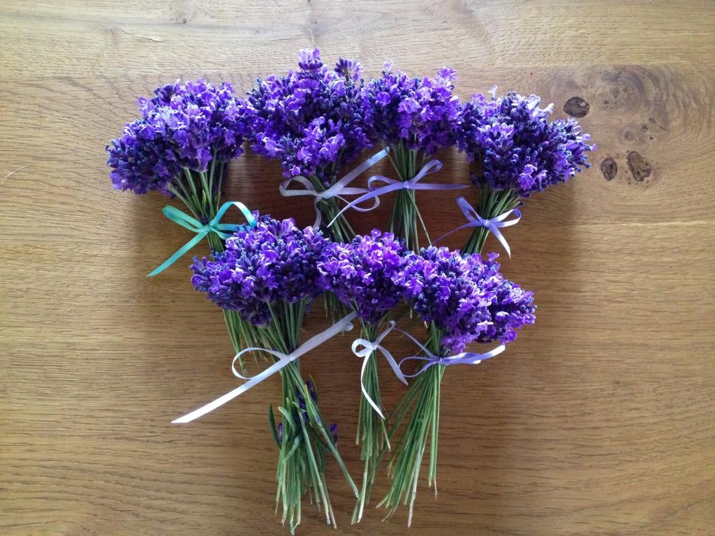 105_Bio-Lavendel-aus-dem-Garten-jährlich-neu